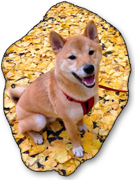 Ponta Outdoors: Ponta sitting amongst the autumn leaves